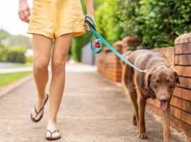 Dog walker service (Manor House / Harringay Green Lanes)