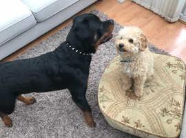 Dog trainning and behaviour