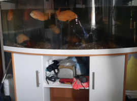 5ft bow fronted tank