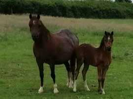 Stunning sec a filly
