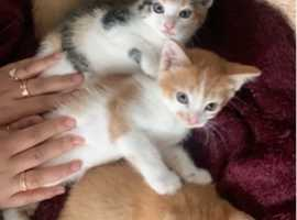 Kittens ready for they new home £120