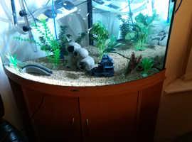Corner Tropical Aquarium