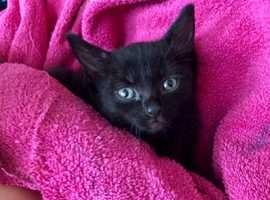 Black kitten girl ready to go