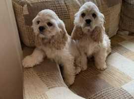 Puppys 5 months