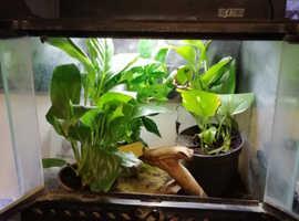 Hourglass tree frog and exo terra setup