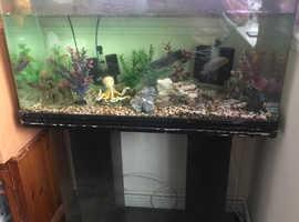 140L complete aquarium
