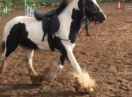 Stunning quality mare.
