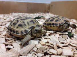 Tortoise holiday boarding service Northampton