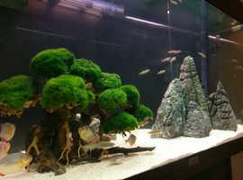 Juwel Rio 125 Fish Tank Aquarium Setup + 9 Wild Piranha