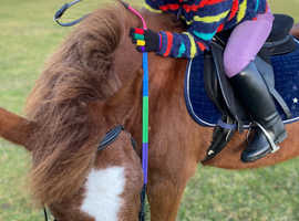 Wanted - safe child pony