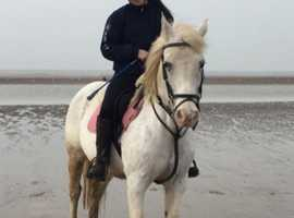 Stunning pony for loan/sale