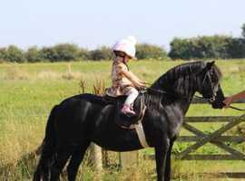 Top class dartmoor lead rein pony