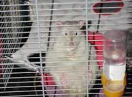 wanted pet cage for free