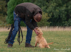 PROFESSIONAL AWARD WINNING, FULLY INSURED DOG TRAINERS & DOG BEHAVIOURISTS COVERING KENT & SOUTH EAST LONDON
