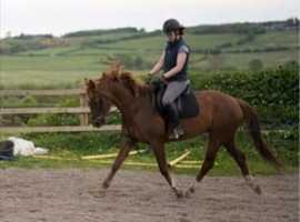 Freelance rider avaliable