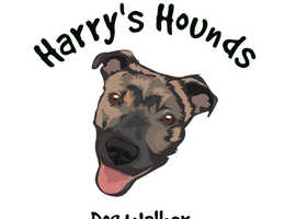 Harry's hounds dog walking