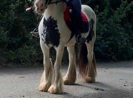 Safe & sensible mare