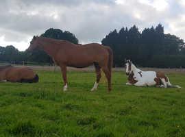 DIY stables / Sole Use Yard / Field