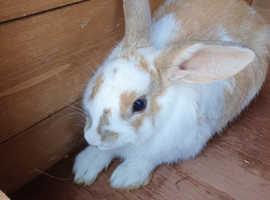 Beatiful  rabbits