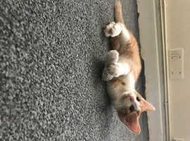 Kitten looking forever lovely home