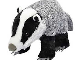 Lost badger in Mansfield!
