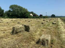 Organic hay