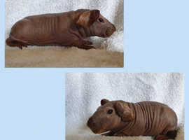 Skinny pigs baby boys and girls