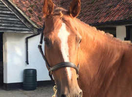 Proven Broodmare with great breeding