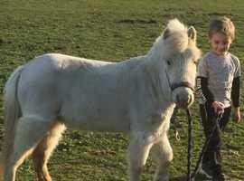 Cream spotted mare