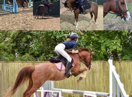Amazing Pony Club/All rounder