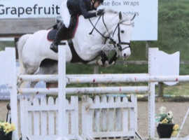 Stunning JC pony for sale