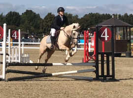 Pony with the X-Factor  Jumping Machine