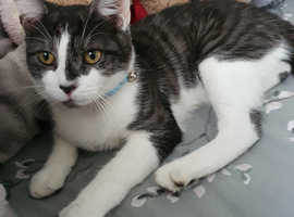 2 cats for adoption