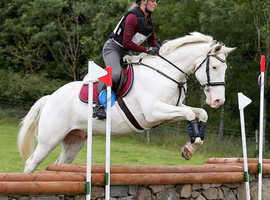 15.2HH All Rounder For Sale