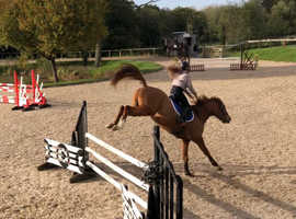 Young talented stallion for sals