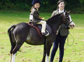 Welsh A project lead rein pony