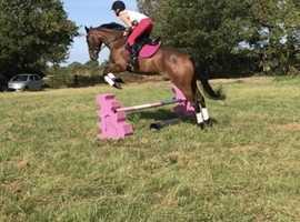 Eventing / all rounder prospect
