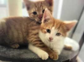 2 boy kittens