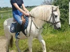 Highland type ex riding school