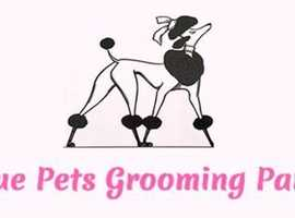 Dog Groomer Needed Urgently