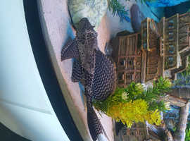 Free cat fish