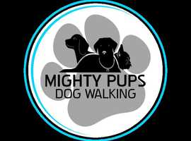 DOG WALKER & PET SITTER , STAINES, BEDFONT, ASHFORD & SURROUNDING AREAS