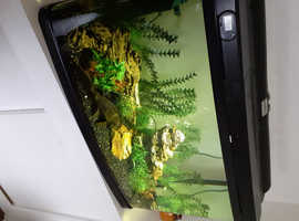 120L Tropical Fish Tank with Fish