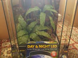 Crested gecko starter kit