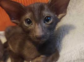 Gorgeous little kitten