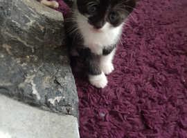 1 beautiful kittens ready now