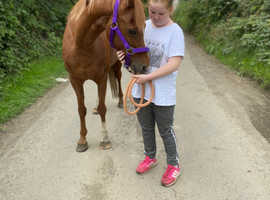 Perfect lead rein or second pony looking for a family
