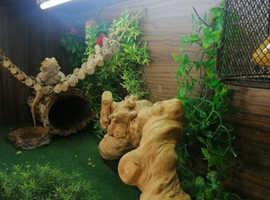 Bearded dragon full set up vivarium