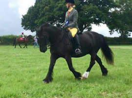 13.3hh pony for part loan Shedfield, Fareham