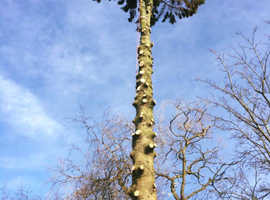 Tree Surgery, Hedge Work, Stump Grinding, Grounds & Garden Maintenance